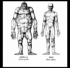 Comparison between Man and gorilla